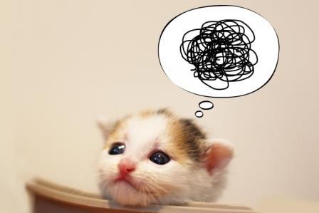がっかり猫